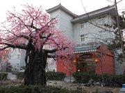 Sanguobinshe Cultural Boutique Hotel Beijing Capital Airport