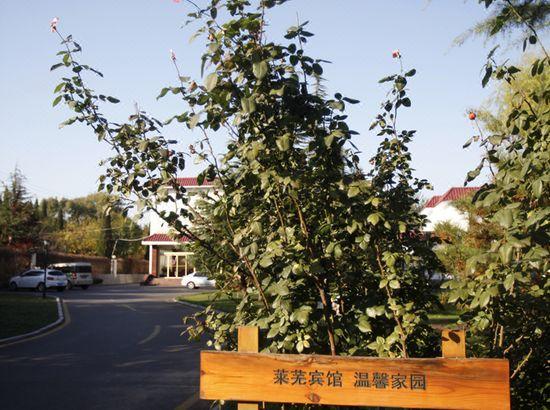 济南义乌宾馆预订_莱芜济南地址价格、宾馆、情趣商贸城莱芜图片