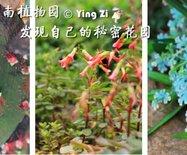 【广州-华南植物园】走进心田的秘密花园??花痴树痴不看不活?图92张