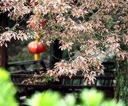 江南旅行:四个各具气质的水乡古镇
