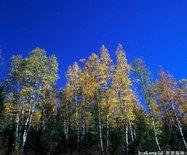 呼中森林公园