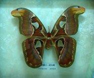 神农架自然博物馆