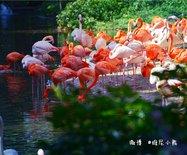【广州长隆】换个视觉高空缆车中看野生动物世界啦!