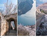 北京|撞道口长城·杏花十里倚青墙