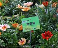 【实拍】北京植物园国外珍稀菊花展:春天也能赏菊花