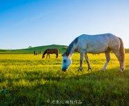 河北|自驾草原天路,感受木兰围场草肥花艳之美