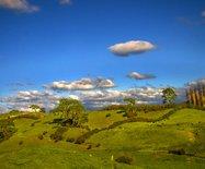 新西兰旅游(十四)北岛牧场风光