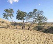 实拍:天气最热的时候,我在新疆(图)