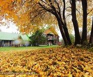 以沉静的心绪,等待这个秋天的到来