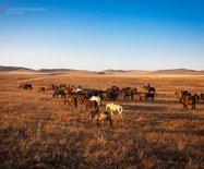 正藍旗,真實的草原牧民生活,雖然生活簡單卻都是百萬富翁
