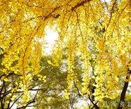秋天的故宫,美成了一首诗