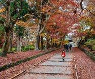 日本|红叶狩?艳遇京都