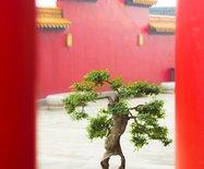 游走绍兴【大香林&兜率天宫】,慢拍慢画去旅行。