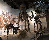 【结伴拼车】呼伦贝尔南北线八日行——扎赉诺尔博物馆