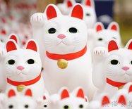 这个?#26053;肀皇?#21315;只招财猫包围了,吸猫人士纷纷沦陷!