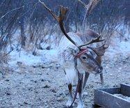 探秘:中国最后的狩猎部落