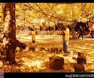 银杏树下惬意美景【腾冲江东】