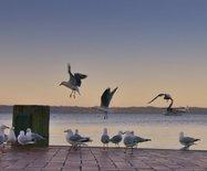 新西兰游之五----黄昏下的罗托鲁瓦湖