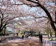 全球最宜居的城市东京?转角遇到的那些小确幸