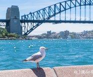 【澳大利亞】南半球正在入夏,去澳大利亞繼續享受夏日的陽光海浪和沙灘吧!