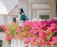 【海南】三亚市花三角梅盛放,开得最美的地方竟然在这里!