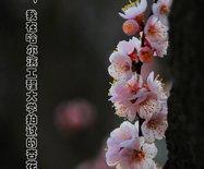 这些年,我在哈尔滨工程大学拍过的杏花林