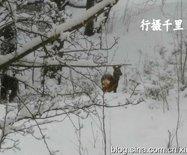 【瑞典见闻】大雪重现真正的林海雪原景观:斯德哥尔摩随拍2