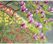 春暖花开好时节,驱车前往魔都后花园,感受田园牧歌的魅力
