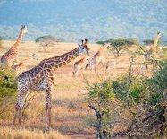 非洲·在南非开启一场与野生动物?#30446;?#37326;之旅!