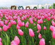 """【五月推荐】出游""""北上海"""",这里隐藏了多少诱人的食色春光,等你去发现"""