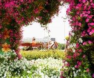 水比油貴的迪拜,竟然有一座奇跡花園種植了4500萬株鮮花!
