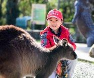 巴拉瑞特,澳大利亚野生动物的成长天堂,孩子们的欢乐海洋