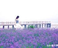【秦皇岛渔岛】大海与温泉同在,童年与梦境共生。