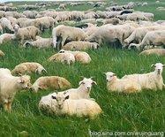 呼伦贝尔大草原,牛羊成群马儿跑(图)