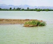 沙依水,水偎沙,贺兰山下有奇观——宁?#26053;桑?#20043;六)
