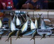 马来西亚沙巴,这里的海鲜卖出了白菜价