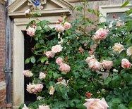 春游英伦记—索尔兹伯里(Salisbury)