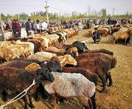南疆自驾-西域列国周游记(七)喀什-阿克苏