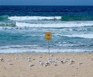 悉尼最大雷暴天气来临之前曼丽海滩最后的宁静