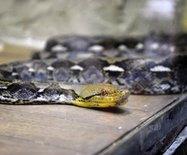 大连·旅顺蛇博物馆