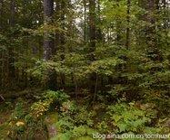 东北十日:长白山·地下森林