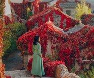 """北京这个地方已经红""""疯""""了!揭秘古北水镇红叶最佳网红拍照地点"""