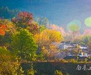 没有红枫、没有银杏,这里却成为了江南最美的秋天