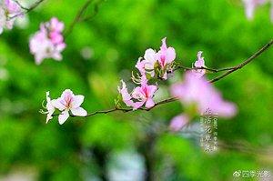 """2元搭""""赏花专列"""",穿越花海玩遍半个广州"""