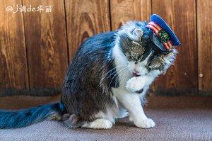 """【日本】重游江户风情的会津地区,拜访以""""爱""""为名的猫站长"""