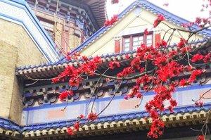 广州花开满城 赏花名单出炉