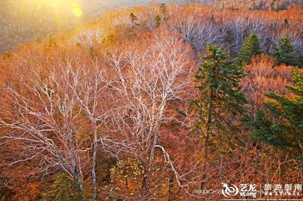 【黑龙江览秋】虎峰岭,雪藏在林海深处的醉美画卷