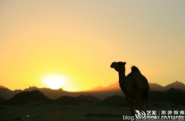 可爱的贝都因儿童,帽子上还是埃及国旗的编造。   她们有一套烤馕的好手艺。馕是她们的主食,可以储存很久,抵御沙漠的饥荒。  而在沙哈拉、埃及、阿拉伯沙漠地区的贝都因骆驼游牧人最有声望,他们生活的土地最广袤。  她们喜欢自称为驼民,骆驼是她们家庭的组成部分。    运输、贸易,新娘的彩礼、凶手的赎罪金、赌博者的赌注、酋长的财富,贝都因人都是以骆驼为计算单位的。