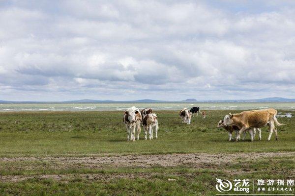 玉树卓舞:青藏高原上千年舞一回