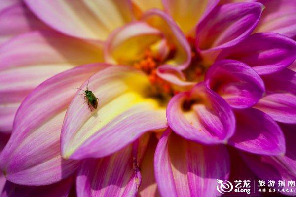 花儿虽美,但从来都是静静地绽放.   正所谓:一花一世界,一叶一菩